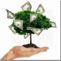 albero denaro