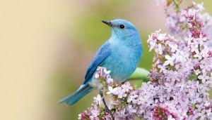 """""""The path of the bird"""": il modo più efficace per arrivare al risveglio spirituale"""
