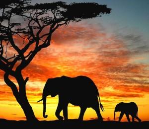 Qual è la connessione tra gli elefanti e le nostre abitudini?
