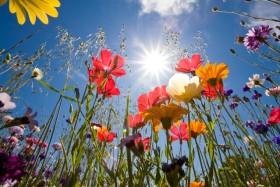 Il ruolo dei fiori nella Legge d'Attrazione… Leggi e condividi!